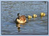Sinking Ponds10