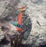 Bermuda underwater