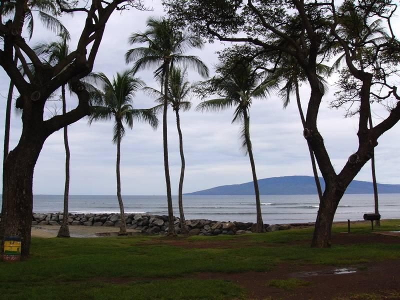 Beach Palms at Maui