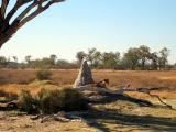 Termite mound with lioness