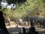 Elephants arrive in camp!