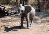 Dumbo?