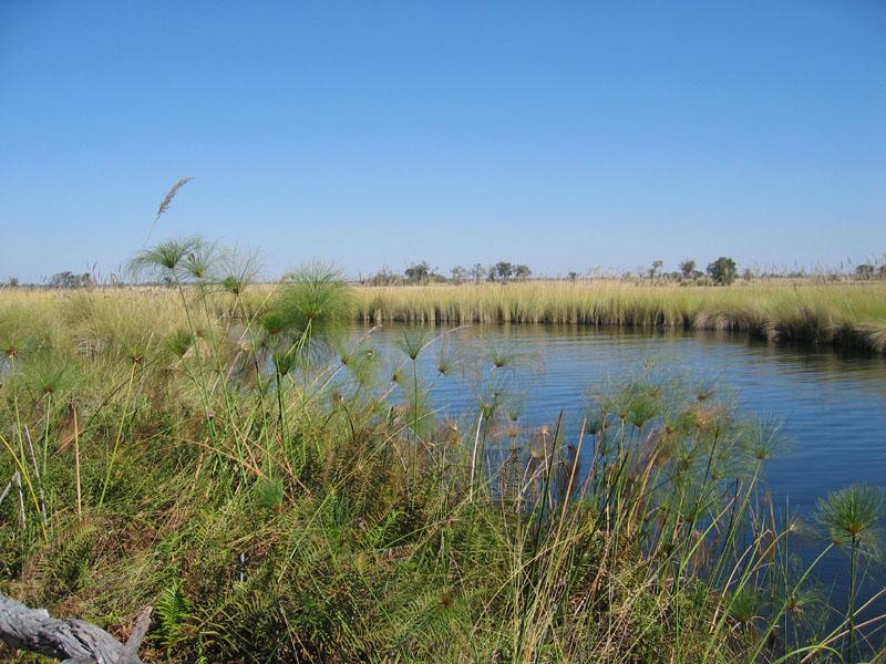 The Okavango Delta