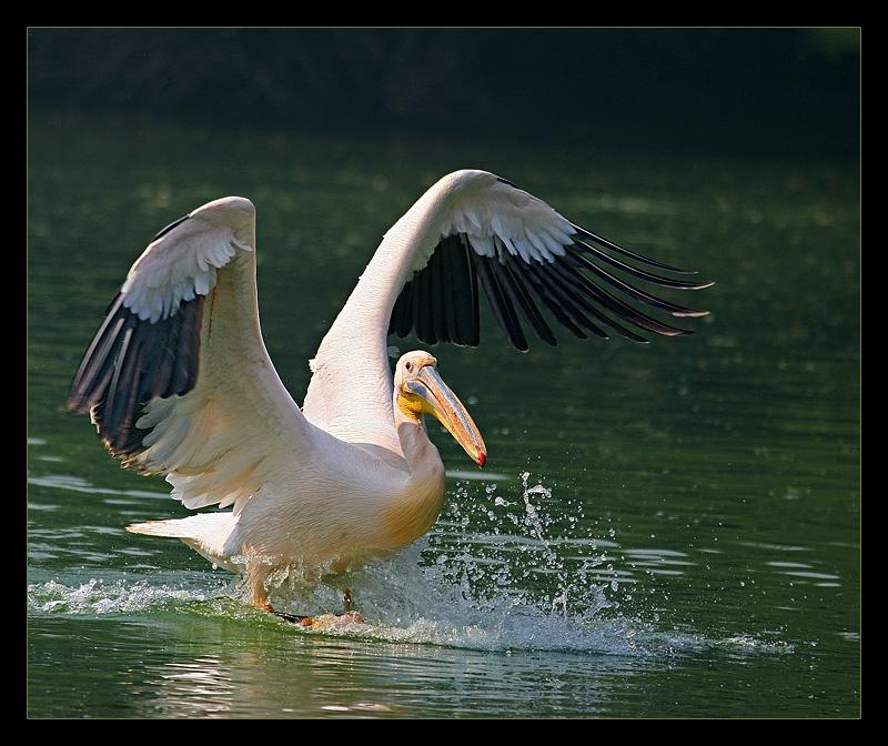 Pelican Landing November 2004