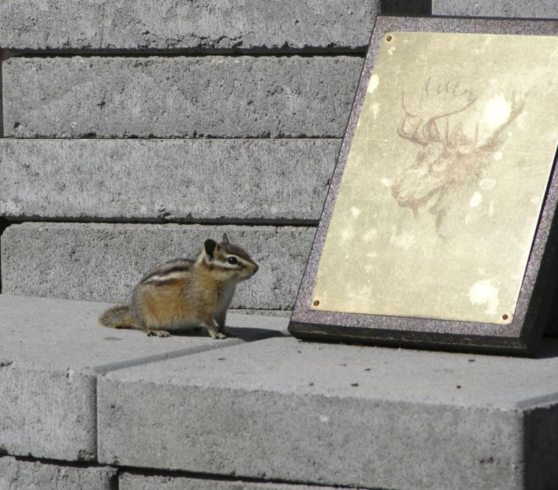 Chipmunk and Zoo moose plaque DSCN1389.jpg