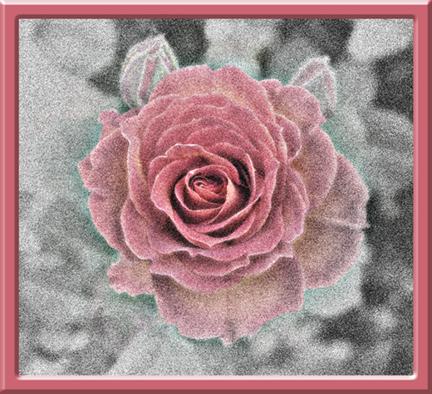 IR rose4emil.jpg