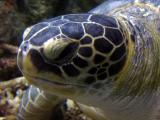 Mr. green turtle up close and personal