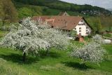 Bauernhaus in Wildegg