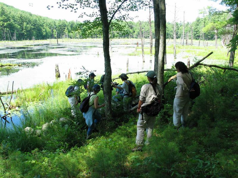 Beaver Pond 5200