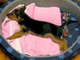 Ronja - mein erster Hund!