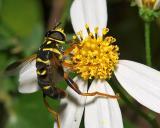 Wasp7.jpg