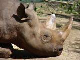rhino1319.JPG