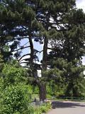 tree1344.JPG