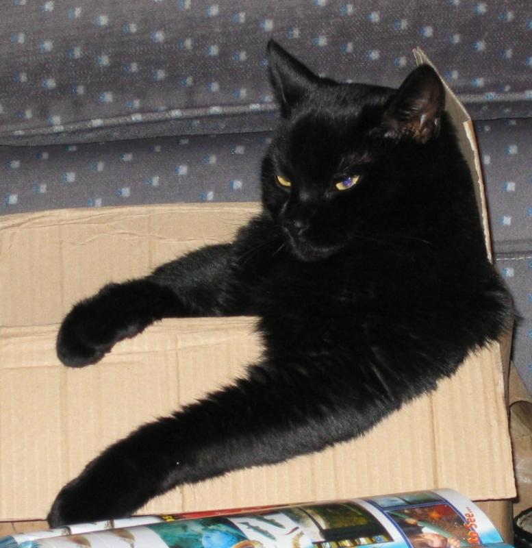 Jasper in Box