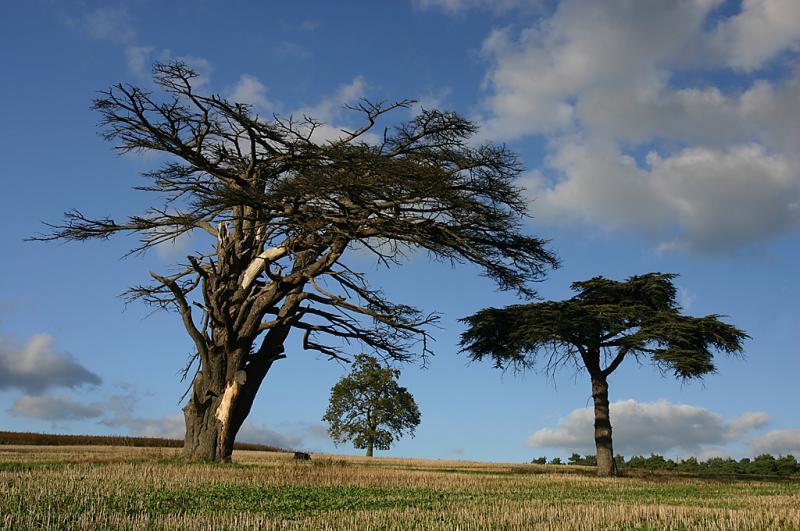 West Surrey 20041004 Img_12911 Peper Harow Tree.jpg