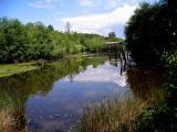 Fishtrap Creek