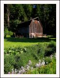 Old barn near Chilliwack, British Columbia