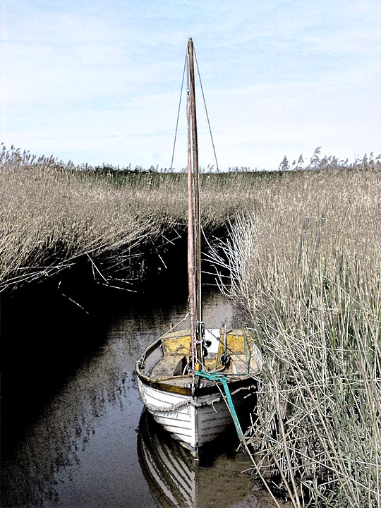At  Rest ,Cley Marshes