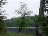 Illinois River 3.jpg