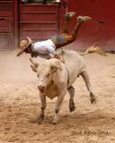 Acrobatic Bull Rider