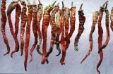 Amasya dried peppers