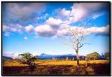 Arcoiris camino de Monteverde