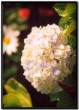 Flor en Monterverde