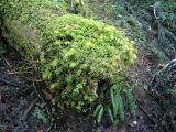 Lush Log