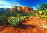 Cactus Vista - #002
