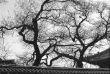 600treebranches.jpg