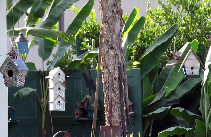 Jimmys Birdhouses