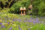 Bluebells at the Armadale Castle Gardens