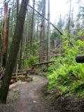 Wind storm damage & nice trail