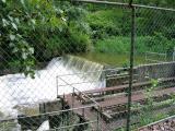 Waterworks along the Squak Mt. Access Trail
