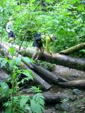 Negotiating logs on the Central Peak Trail