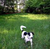 Joop's Dog Log - Wednesday May 12