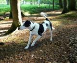 Joop's Dog Log - Thursday May 13