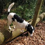 Joop's Dog Log - Wednesday May 19