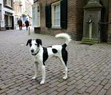 Joop's Dog Log - Thursday May 20