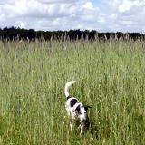 Joop's Dog Log - Monday May 24