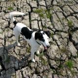 Joop's Dog Log - Tuesday May 25
