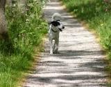 Joop's Dog Log - Tuesday May 27