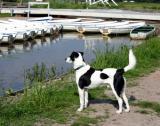 Joop's Dog Log - Saturday May 29