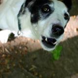 Joop's Dog Log - Sunday May 30