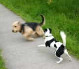Joop's Dog Log - Tuesday June 01