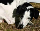 Joop's Dog Log - Sunday September 12