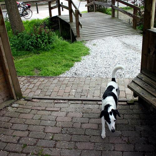 Joops Dog Log - Saturday May 22