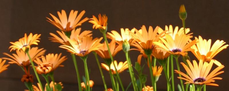 Daisy Flower Box