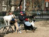 At the  Dog Run in Washington Square Park