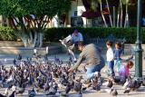 DSC01683 - Feeding the birds